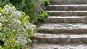 Каменные шаги в старый парк Стоковые Изображения