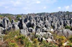 Каменный лес Стоковые Изображения RF