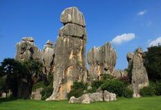 Каменный лес Стоковые Фото