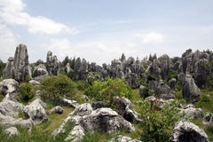 Каменный лес Стоковое фото RF