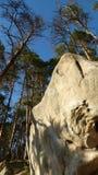 Каменный лес Стоковое Фото