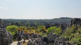 Каменный лес Стоковая Фотография RF