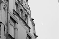 Каменный кот на крыше Стоковая Фотография RF