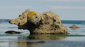 Каменный мамонт, залив Tikhaya, Сахалин стоковое фото