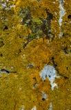 Каменный мох Стоковое Фото