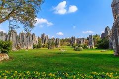 Каменный пейзаж парка геологии леса Стоковое Изображение