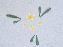 Каменный пол в саде камень текстуры в парке Стоковая Фотография