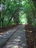 Каменный путь в лесе Стоковые Фотографии RF