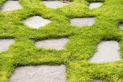 Каменный путь в саде парка зеленой травы Стоковое Изображение