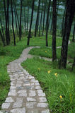 Каменный путь к долине Стоковое фото RF