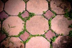 Каменный путь прогулки блока в парке Стоковое Изображение