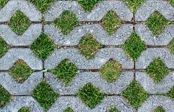 Каменный путь прогулки блока в парке с зеленым цветом Стоковые Изображения