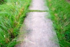 Каменный путь прогулки блока в саде Стоковое Изображение RF