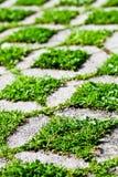 Каменный путь прогулки блока с зеленой травой Стоковое Изображение RF