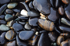 Каменный пляж Стоковое Изображение