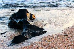 Каменный пляж Стоковые Фотографии RF