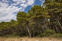 Каменный сосновый лес стоковые фото