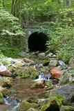 Каменный тоннель в древесинах 3 & x28; vertical& x29; Стоковое Изображение