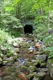 Каменный тоннель в древесинах 5 & x28; vertical& x29; Стоковые Фотографии RF