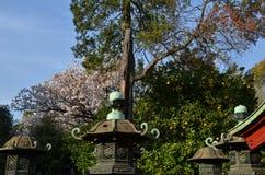 Каменный фонарик святыни Ueno Toshogu на парке Ueno стоковое изображение