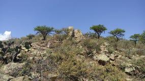 Каменный холм в semi desertic Мексике Стоковые Фото
