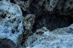Каменный цветок Стоковое Изображение