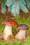 2 каменных гриба. Стоковая Фотография
