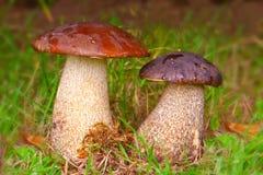 2 каменных гриба. Стоковые Фотографии RF
