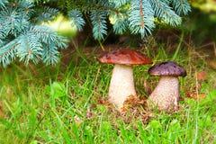 2 каменных гриба. Стоковое Фото