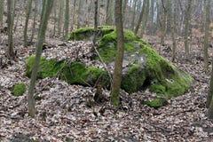 Камень в лесе стоковое фото