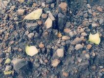 камень в земной предпосылке Стоковое фото RF