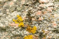 Камень в макросе с желтым цветом лишайника ярким на поверхности Стоковая Фотография
