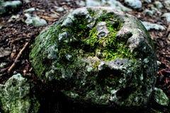 Камень в мхе стоковое изображение rf