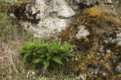 Камень горы с мхом Стоковое Фото