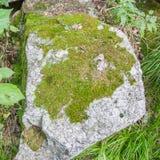 Камень гранита с зеленым мхом Стоковые Фото