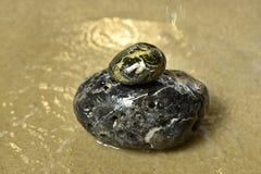Камень Дзэн Стоковые Изображения