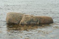 камень, живая природа северная Стоковые Изображения RF