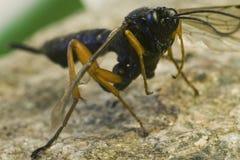 камень жука Стоковые Фото