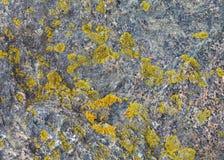 камень заплат лишайника естественный Стоковое Изображение RF