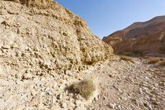 камень Израиля пустыни Стоковые Фотографии RF