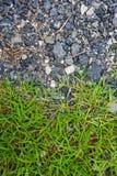 Камень и трава стоковая фотография rf