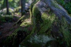 Камень конца-вверх мшистый Стоковые Изображения