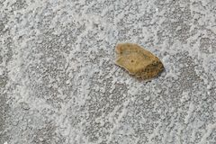 Камень лежит на высушенном дне озера соли Стоковые Фото