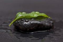 камень листьев Стоковая Фотография RF
