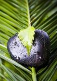 камень листьев Стоковые Фотографии RF