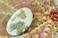 камень листьев Стоковые Фото