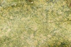 Камень лишайника мха текстуры Стоковая Фотография