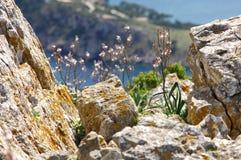 камень лишайника Стоковое Фото
