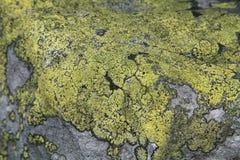 камень лишайника s Стоковые Изображения