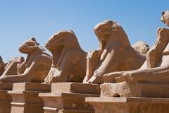 камень львов Стоковое Изображение